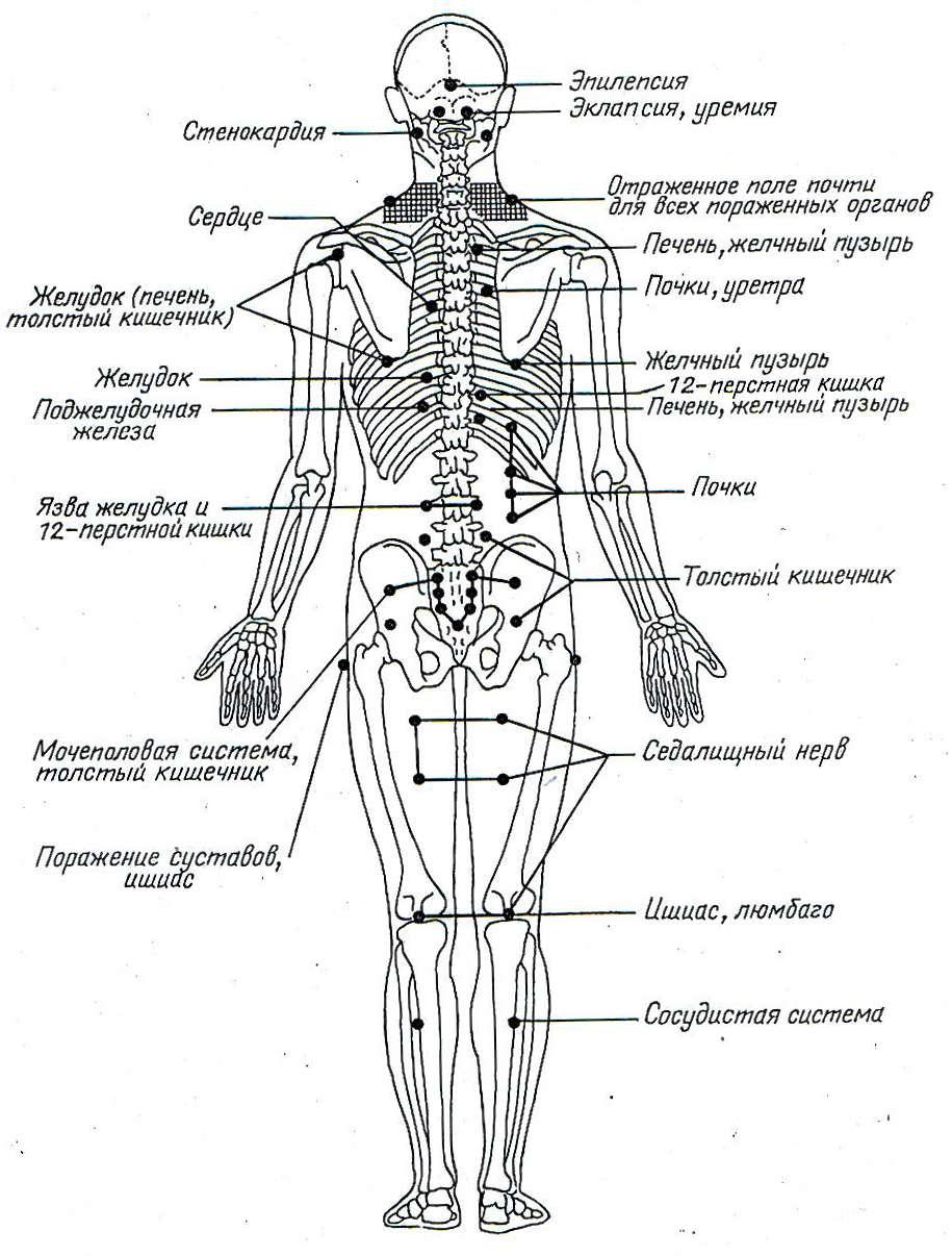 Пункты максимальной болевой чувствителности при заболеваниях внетренних органов, рекомендуемые для акупунктуры по принципу реперкуссии