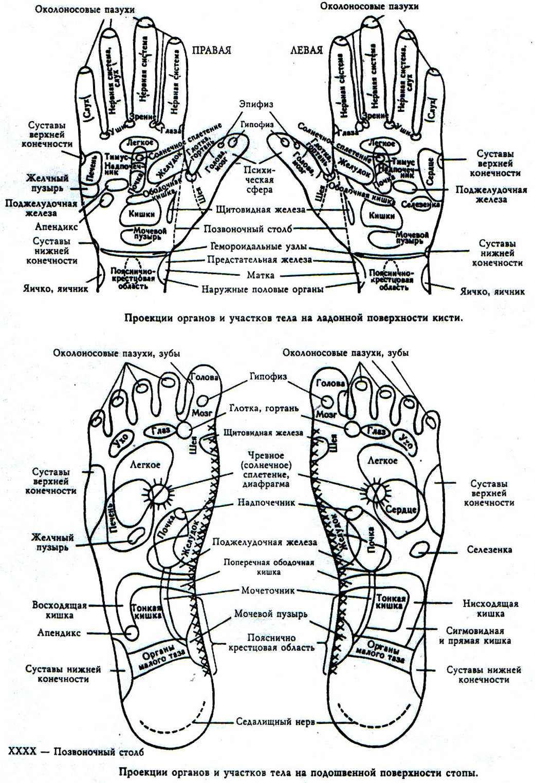 Проекция внутренних органов на кисти и стопы
