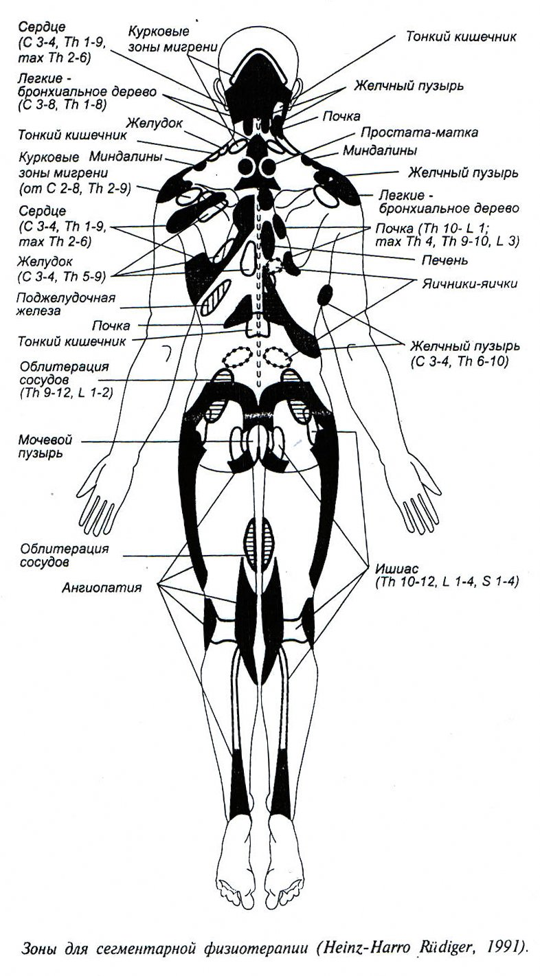 Зоны для сегментарной физиотерапии