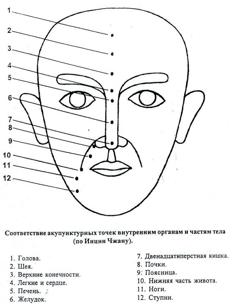 Схема соответствия акупунктурных точек внутренним органам и частям тела(по Инцин Чжану)