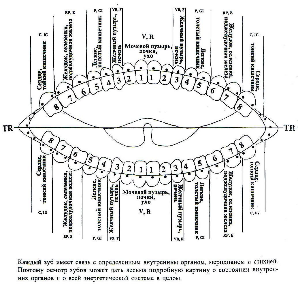 Связь зубов с внутренними органими